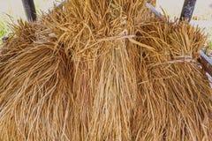 Сухой рис что kepping в амбаре стоковое фото rf