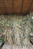 Сухой сахарный тростник Стоковые Фотографии RF
