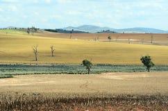 Сухой сельский ландшафт фермы в центральном западном NSW, Австралии стоковая фотография rf