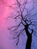 Сухой силуэт ветвей Стоковое Фото