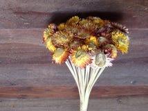 Сухой солнцецвет на деревянной стене Стоковая Фотография RF