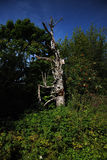 сухой старый вал Стоковые Фото