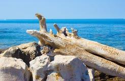 Сухой ствол дерева на береге моря Стоковые Изображения RF