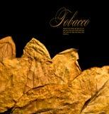 сухой табак листьев Стоковая Фотография RF