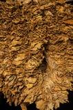 Сухой табак Стоковая Фотография