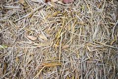 Сухой текстурированный крупный план соломы для предпосылки и стоковое изображение