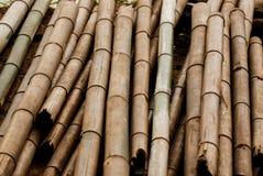 Сухой толстый бамбуковый поляк Стоковое фото RF