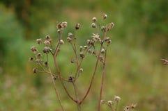 Сухой цветок на предпосылке леса Стоковое Изображение RF