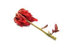 Сухой цветок Стоковые Изображения RF