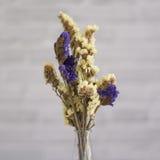 Сухой цветок Стоковая Фотография