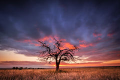 Сучковатое дерево Стоковые Изображения