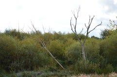 Сушат кустарники и деревья вверх стоковая фотография