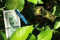 Сушащ 100 долларов счета Стоковые Изображения RF