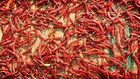 Сушащ накаленный докрасна перец chile на циновке - Spice рынок в Индии Стоковая Фотография RF