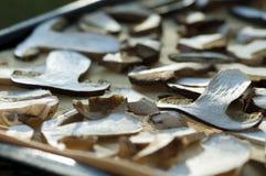 Суша грибы Стоковые Изображения