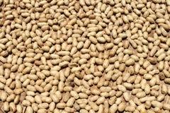 Сушить арахисов Стоковое фото RF