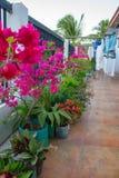 Сушить белье на террасе с цветочными горшками Прачечная на балконе с цветками Концепция домочадца Чистые одежды на веревочке на т стоковое изображение