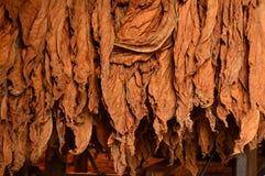 Сушить tonacco стоковая фотография rf