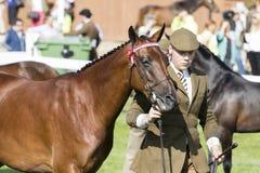 Судить лошадей Стоковое Фото