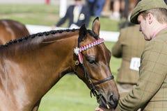 Судить лошадей Стоковые Изображения RF