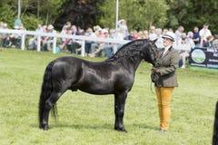 Судить лошадей Стоковое Изображение