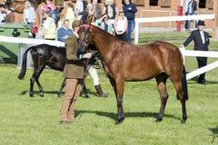 Судить лошадей Стоковое фото RF