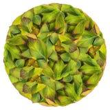 Сфера круга от листьев осени Стоковые Изображения