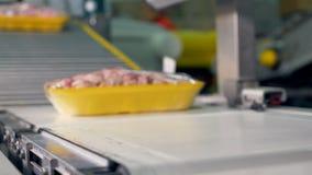 Сфокусированные подносы мяса цыпленка двигают на запачканную линию транспортера сток-видео