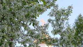 Сфокусируйте движение от золотого креста купола церков к белым цветкам ветвей яблони цветения акции видеоматериалы