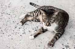 Сфокусируйте сиротливую сторону чувства рассеянного кота outdoors Спать на стоковая фотография rf