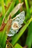 сформированное семя сердца стоковые фото