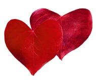 Сформированное сердце 2 красное листьев Стоковое Изображение RF