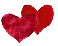 Сформированное сердце 2 красное листьев Стоковое Изображение