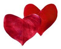 Сформированное сердце 2 красное листьев Стоковые Изображения RF