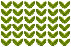 Сформированное сердце лист изолированным на белой предпосылке Стоковая Фотография