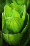 сформированные листья чашки Стоковое Изображение RF
