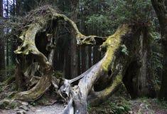 сформированный корень сердца Стоковая Фотография RF