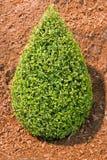 сформированный bush стоковая фотография rf