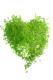 сформируйте траву сердца Стоковое Изображение RF