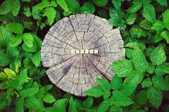 Сформулируйте природу шариков алфавита на поверхности пня дерева в лесе Стоковые Изображения