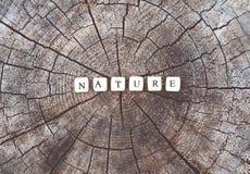 Сформулируйте природу шариков алфавита на поверхности пня дерева в лесе Стоковое фото RF