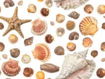 Сфотографированное собрание различных раковин на белой предпосылке Стоковое Изображение RF