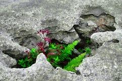 Схватка Burren Стоковые Изображения RF