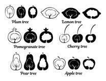 Схематические значки фруктового дерев дерева Стоковые Изображения RF