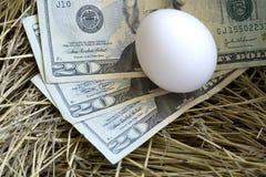 схематическое гнездй яичка Стоковая Фотография RF