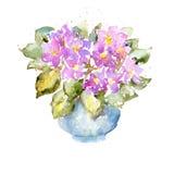 Схематичная красочная картина акварели на белой бумаге Яркие фиолетовые цветки и сочные зеленые листья Стоковое Изображение