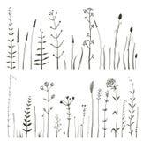 Схематичные одичалые цветки и трава поля на белизне Стоковое фото RF