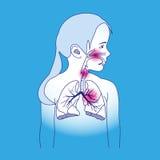 Схема ребенка дыхательная Стоковое Изображение RF