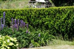 Сходясь изгороди в парке с лужайкой и flowerbed стоковое фото rf