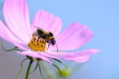 сход пчелы Стоковое фото RF